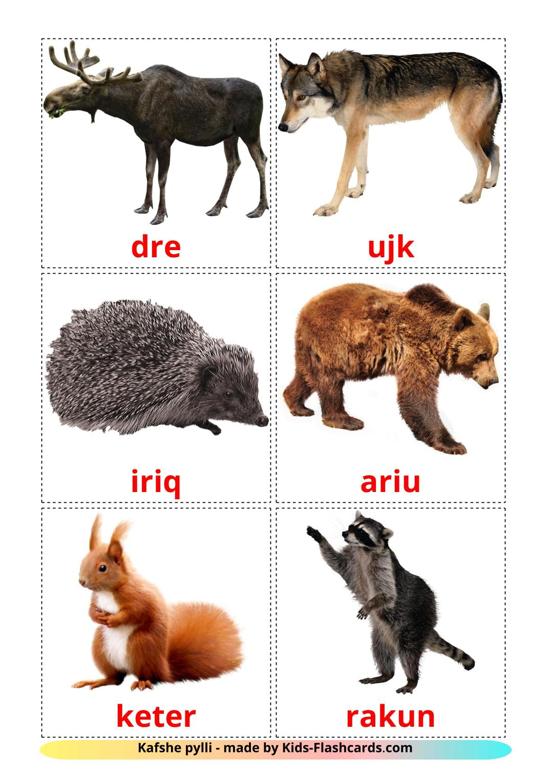 Forest animals - 22 Free Printable albanian Flashcards