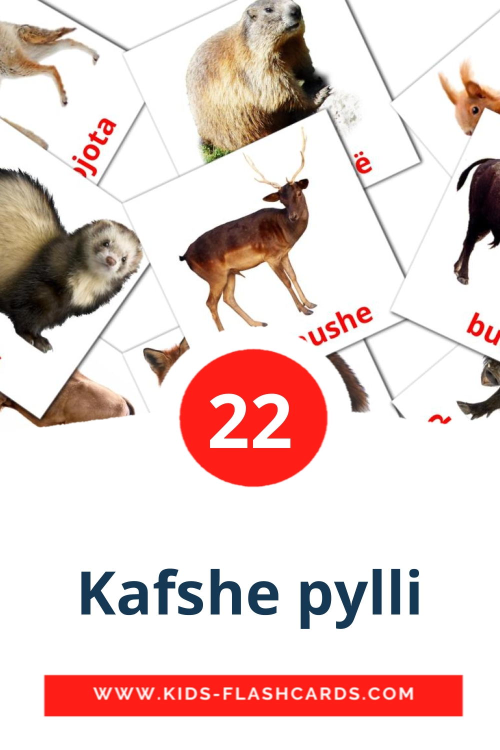 22 Kafshe pylli Picture Cards for Kindergarden in albanian