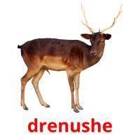 drenushe picture flashcards
