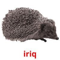 iriq picture flashcards