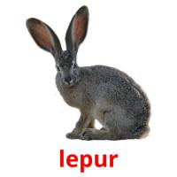 lepur picture flashcards