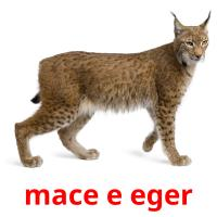 mace e eger picture flashcards