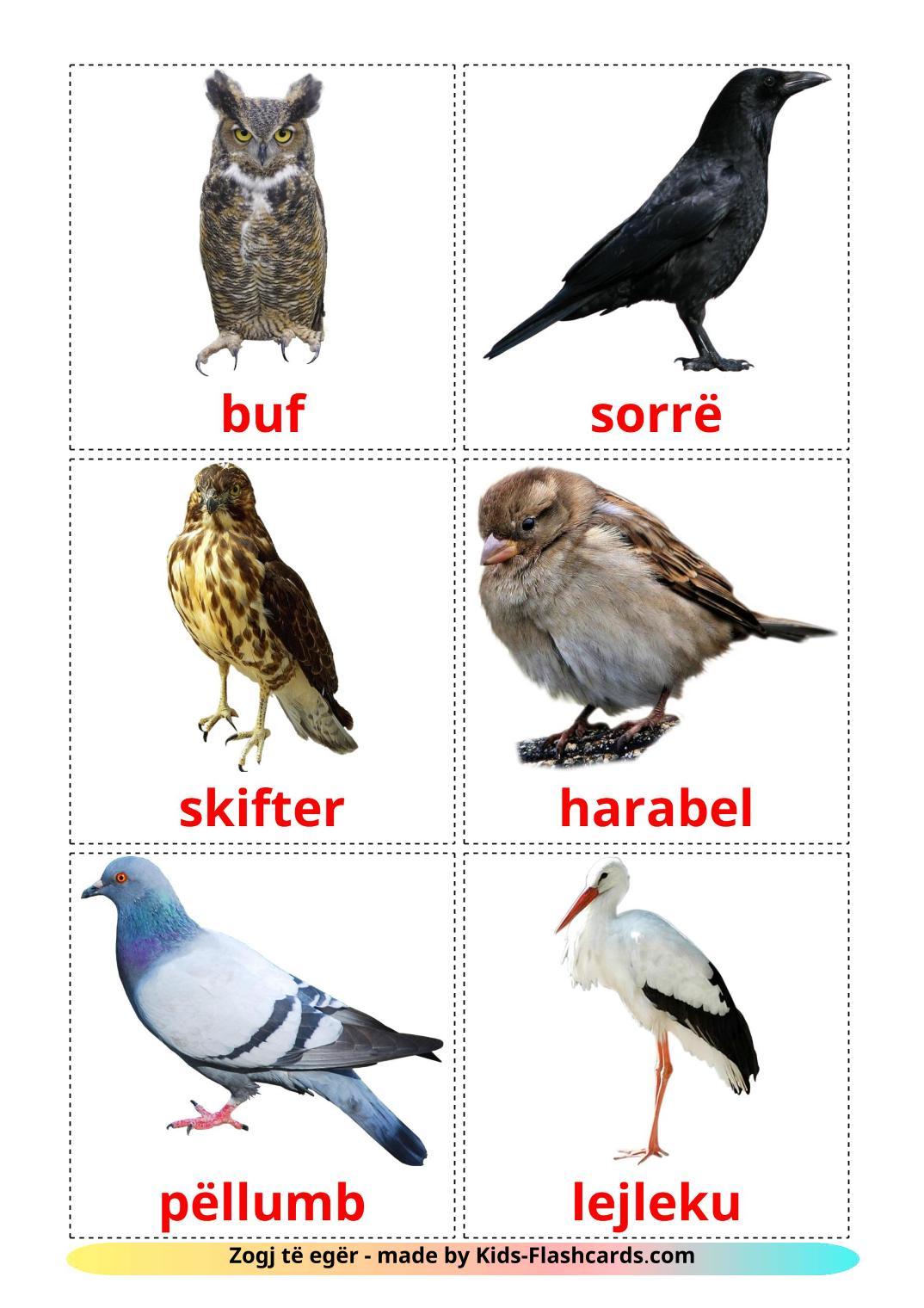 Wild birds - 18 Free Printable albanian Flashcards