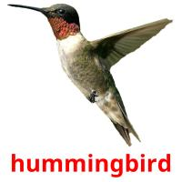 hummingbird picture flashcards