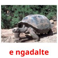 e ngadalte picture flashcards