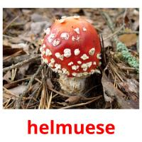 helmuese picture flashcards