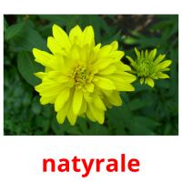 natyrale picture flashcards
