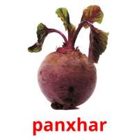 panxhar picture flashcards