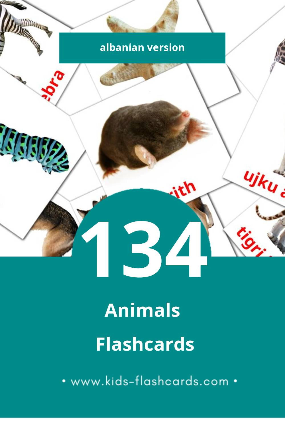 Visual Animales del artico Flashcards for Toddlers (134 cards in Albanian)