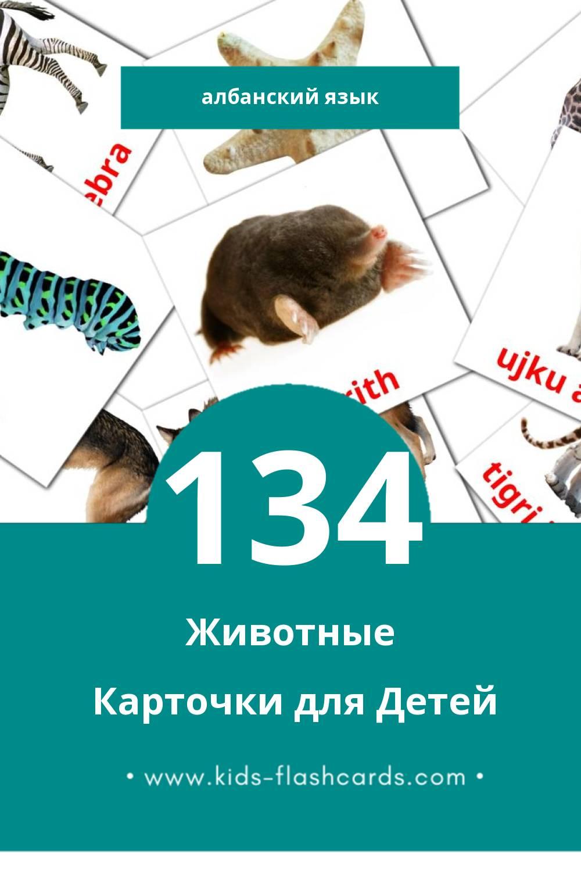 """""""Animales del artico"""" - Визуальный Албанском Словарь для Малышей (120 картинок)"""