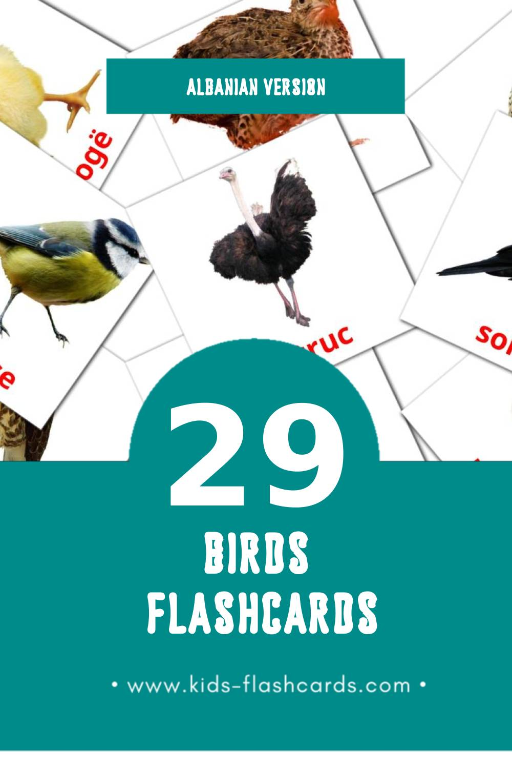 Visual Shpendet Flashcards for Toddlers (29 cards in Albanian)