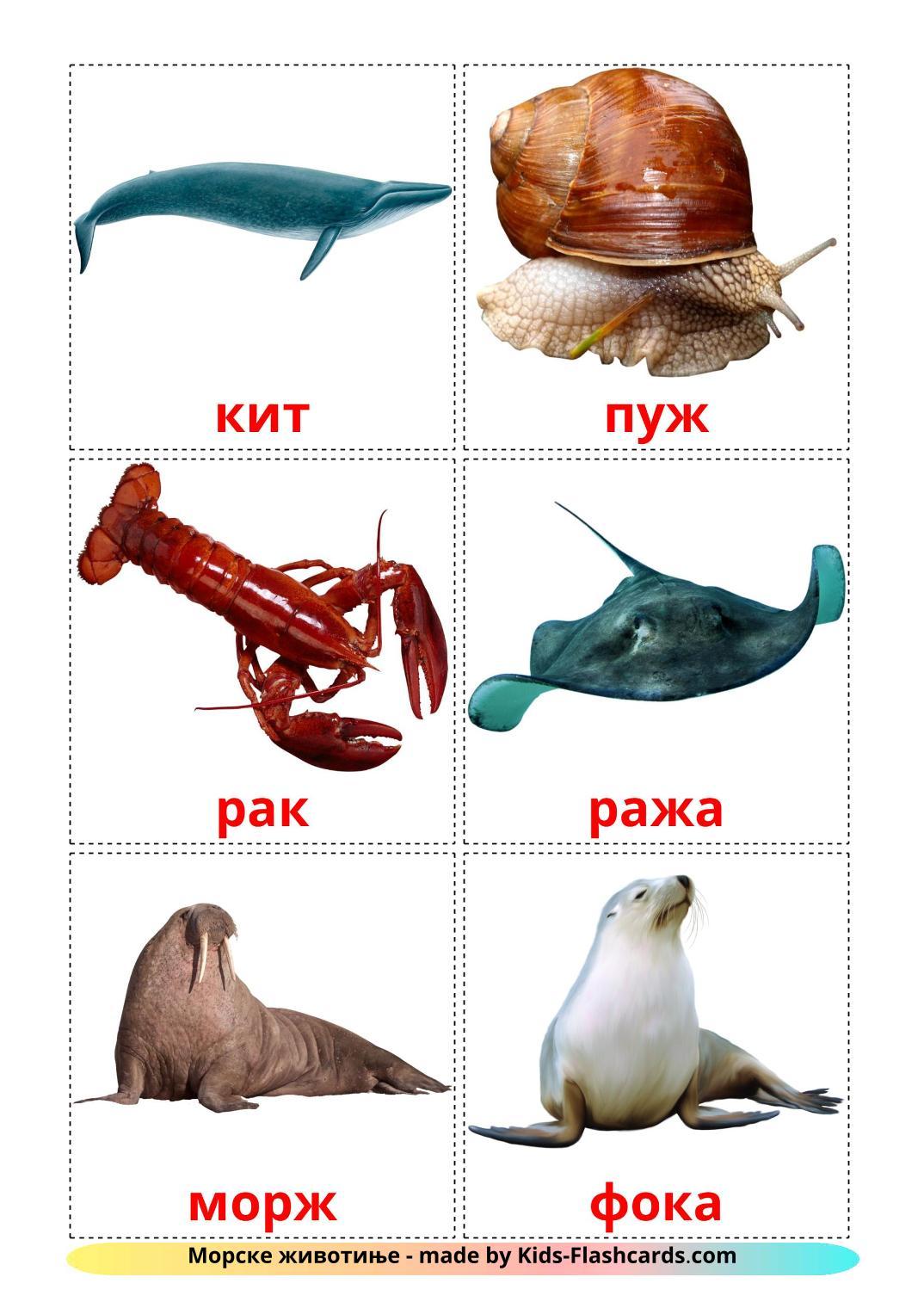 Sea animals - 29 Free Printable serbian(cyrillic) Flashcards