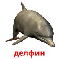 делфин picture flashcards