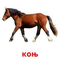 коњ picture flashcards
