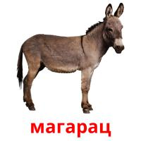 магарац picture flashcards