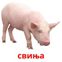 свиња picture flashcards