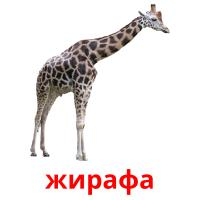 жирафа picture flashcards
