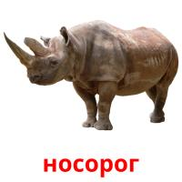 носорог picture flashcards