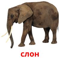 слон picture flashcards