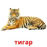 тигар picture flashcards