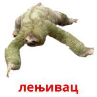 лењивац picture flashcards