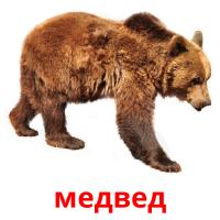 медвед picture flashcards
