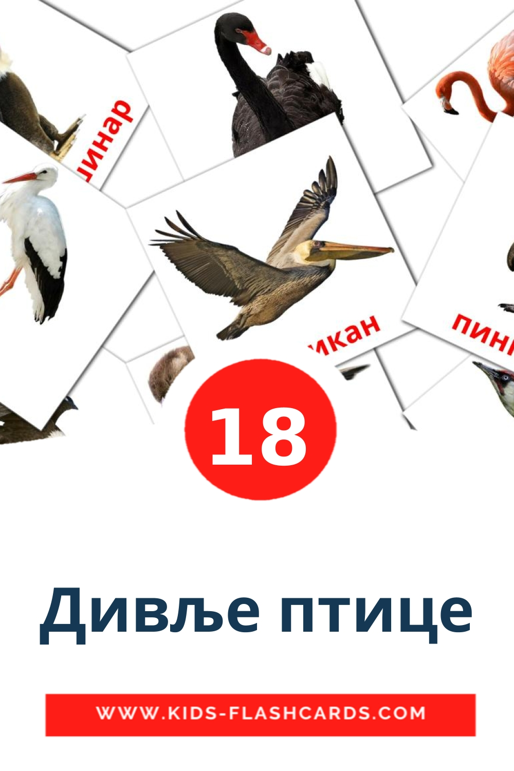 18 Дивље птице Picture Cards for Kindergarden in serbian(cyrillic)