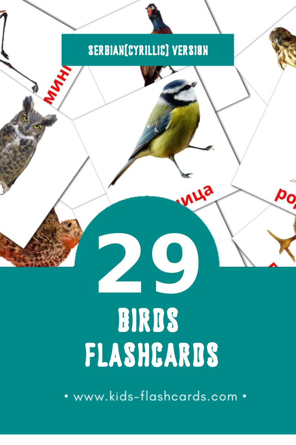 Visual Птице Flashcards for Toddlers (29 cards in Serbian(cyrillic))