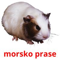 morsko prase picture flashcards
