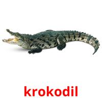 krokodil picture flashcards