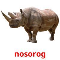 nosorog picture flashcards
