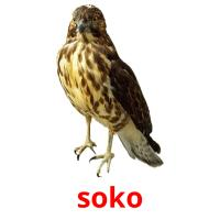 soko picture flashcards