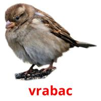 vrabac picture flashcards
