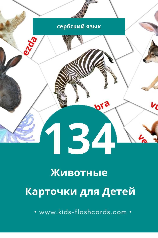"""""""Životinje"""" - Визуальный Сербском Словарь для Малышей (134 картинок)"""