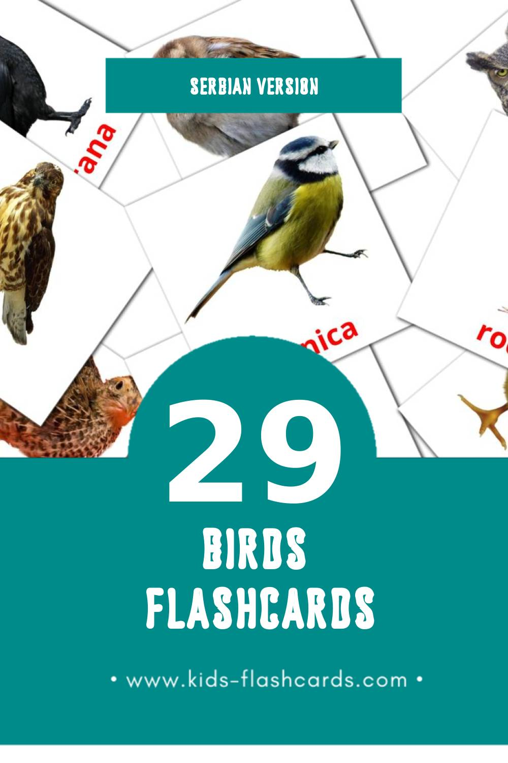 Visual Ptice Flashcards for Toddlers (29 cards in Serbian)