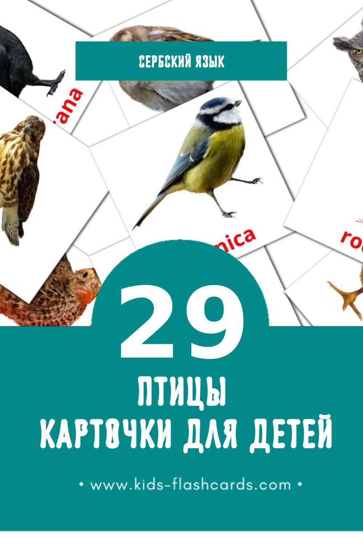 """""""Ptice"""" - Визуальный Сербском Словарь для Малышей (29 картинок)"""