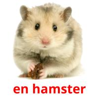 en hamster picture flashcards