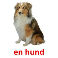 en hund picture flashcards