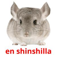 en shinshilla picture flashcards