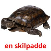 en skilpadde picture flashcards