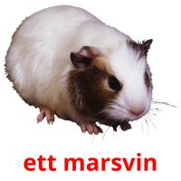 ett marsvin picture flashcards