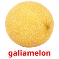 galiamelon picture flashcards