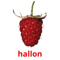 hallon picture flashcards