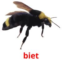 biet picture flashcards