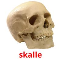 skalle picture flashcards