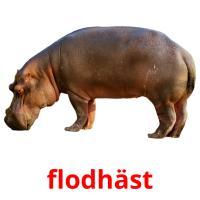 flodhäst picture flashcards