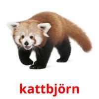 kattbjörn picture flashcards
