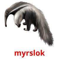 myrslok picture flashcards