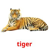 tiger picture flashcards