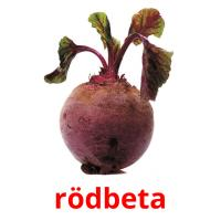 rödbeta picture flashcards